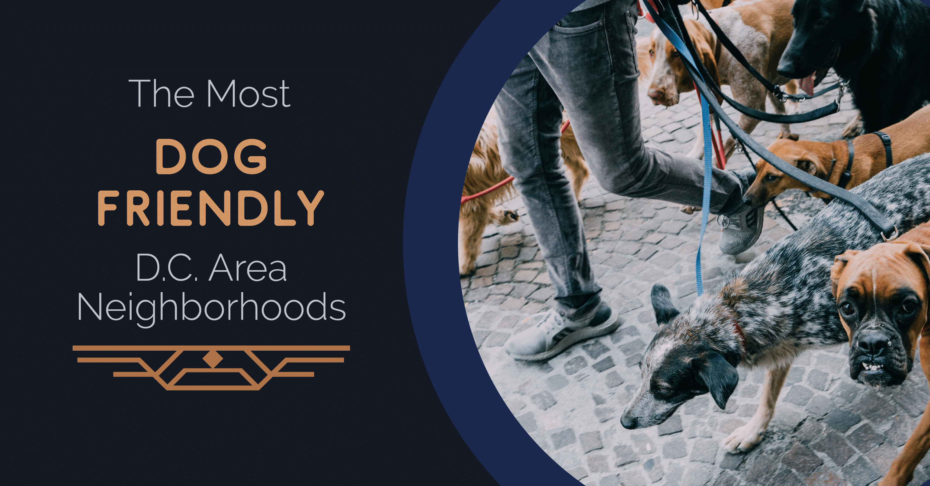 The Most Dog-Friendly D.C. Area Neighborhoods